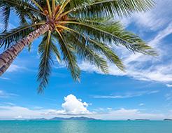 Palm Trees and Beach Thailand